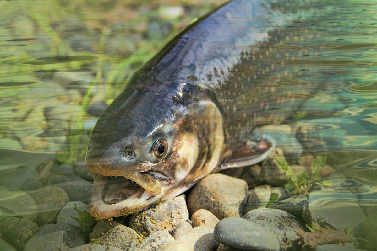 Ge-Fish